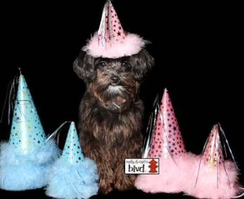 Glitzy Dog Party Hats